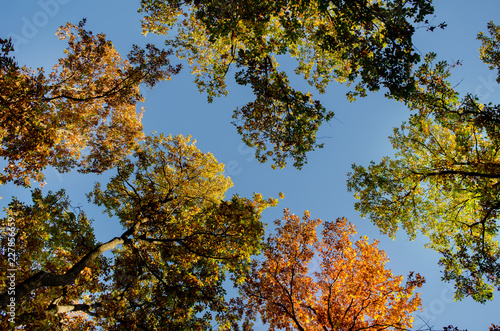 Foto op Canvas Herfst Autumn Trees Top With Clear Sky