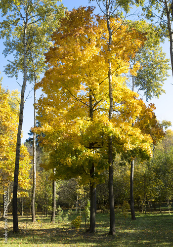 Autumn landscape. Golden trees in the autumn park