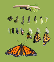 From Caterpillar To Butterfly....