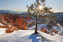 A Tree On A Snow Covered Cliff...