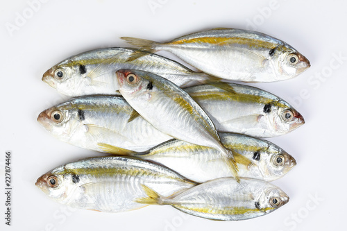 Raw fresh small yellow striped tervally banded slender fish Slika na platnu