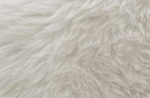 White Animal Wool Texture Back...