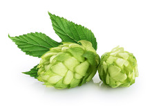 Hops And Hop Leaf Isolated On ...