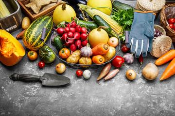 Harvest vegetables with herb kitchen garden on grey concrete