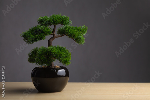 Poster Bonsai Bonsai on the desk. The backdrop is a dark gray background. The bonsai concept adorned the desk to reinforce the aura, japanese whitepine bonsai.