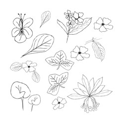 Collection of hand drawn flowers and plants. Monochrome  illustrations in sketch style.