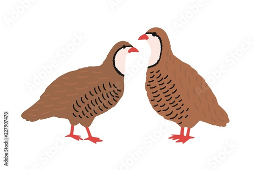 Photo Pair of quails isolated on white background