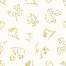Monochrome Seamless Pattern With Linden Leaves And Inflorescences Hand Drawn With Contour Lines On Light Background. Elegant Vector Illustration In Antique Style For Fabric Print, Wrapping Paper.