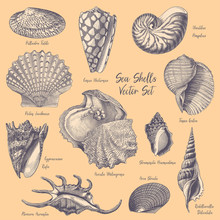 Sea Shells Vector Engravings Collection