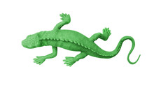 Top View Green Rubber Gecko Isolated On White Background With Clipping Path