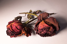 Dried Rose, Dried Red Rose