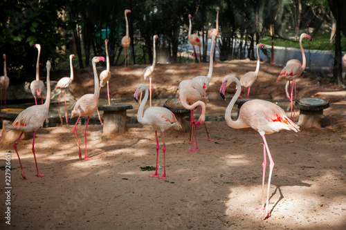 Fotobehang Flamingo Flamingo The pink bird represents the summer. Flamingo a water bird species in the family Phoenicopteridae live in continent America.