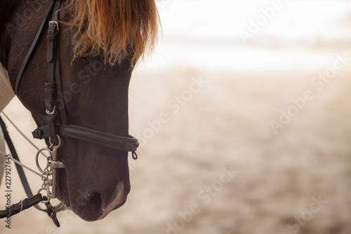 Photo Close up portrait of a horse