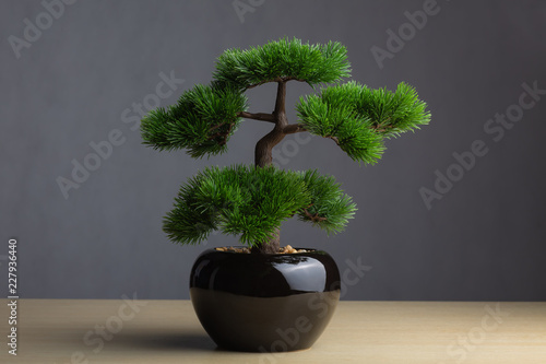 Foto op Aluminium Bonsai Bonsai on the desk. The backdrop is a dark gray background. The bonsai concept adorned the desk to reinforce the aura, japanese whitepine bonsai.