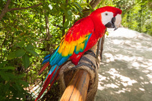 Ara Parrot In The Wild, Mexico