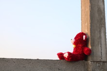 Teddy On Rooftop