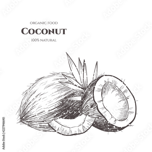 Stampa su Tela Vector background with  coconut . Hand drawn. Vintage style