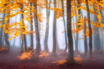 Fototapeta Jesień fantasy misty forest in autumn