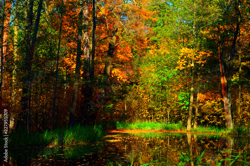 Foto op Plexiglas Bos autumn in the forest