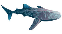 Cartoon Whale Shark Isolated O...