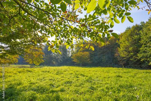 Staande foto Lente Chestnuts in a green field below a blue sky in sunlight at fall