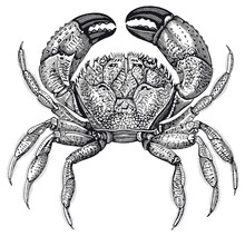 High Detail Crab Engraving