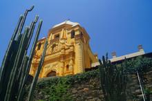 Obispado Cactus Foreground