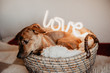 Cuddling puppy in basket with glowing lamp Love