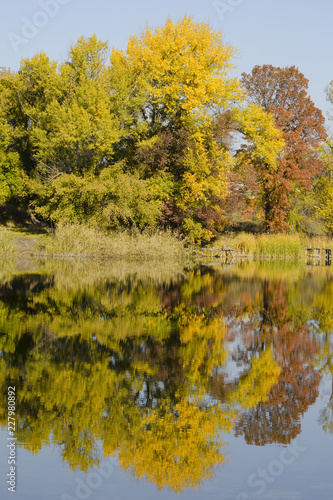 Foto op Canvas Herfst Autumn deciduous forest reflected in the river. Bright blue sky