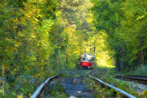 Tram line runs in the dense thickets of forest. Old red tram at the perspective distance. Tram goes through a tunnel in the forest. Kiev, Ukraine. Summer landscape in a park with tram, background.