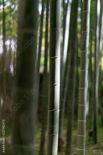 In de dag Bamboo Bamboo forest in Arashiyama, Kyoto