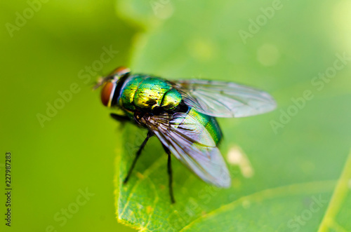 fly on a leaf