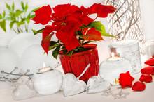 Weihnachtsstern Und Dekoration