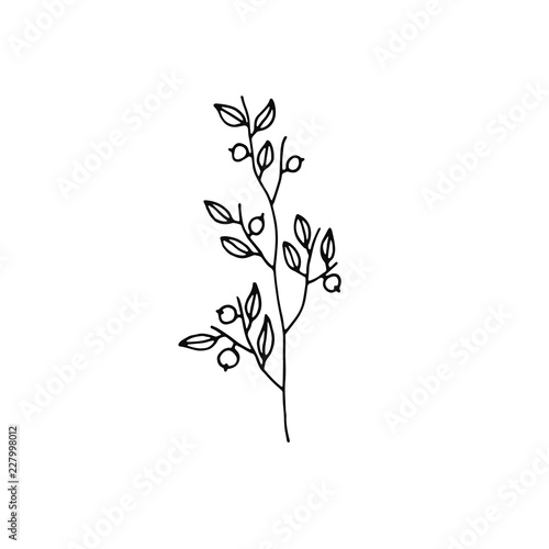 plant twig with berries icon. sketch isolated object Wallpaper Mural