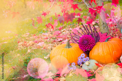 Autumnal garden decoration with pumpkins, heather and dahlia flowers Canvas Print