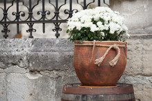 Large Flower Pot With White Ch...
