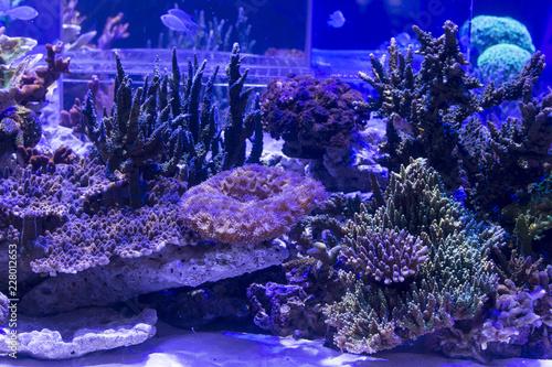 Staande foto Koraalriffen Coral reef aquarium