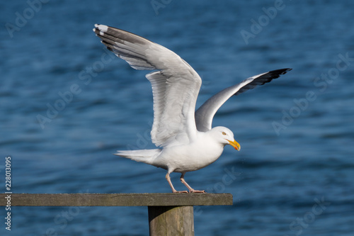 Papel de parede seagull in takeoff