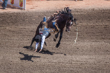 Bucking Bronco Throwing Rider