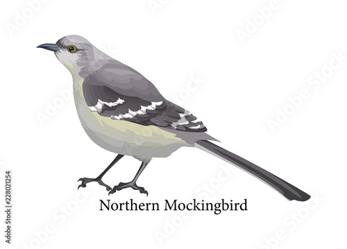 Photo Northern mockingbird realistic exotic with grey beak