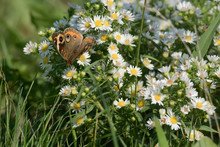 Close-Up Of A Butterfly And A Flower
