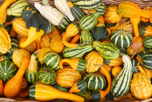An All Over Colorful Background Of Orange And Green Striped Gourds