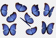 Butterfly Vector. Purple Isola...