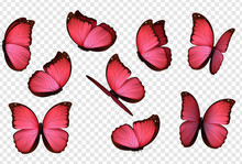 Butterfly Vector. Pink Isolated Butterflies. Insects With Bright Coloring On Transparent Background