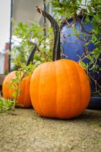 Orange Pumpkins Front Steps