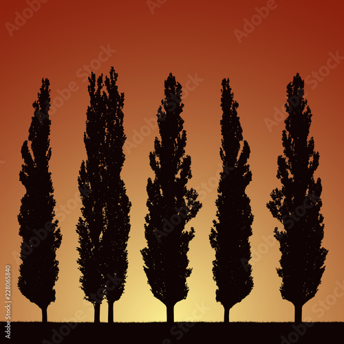 Realistic illustration of silhouettes of five trees - poplars, grass and rising Wallpaper Mural