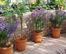 煉瓦の壁と花