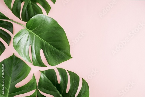 Tropical Leaves Monstera On Pastel Pink Background Flat Lay Top View Copy Space Wall Mural Prime1001 Tropical monstera leaf in watercolor: tropical leaves monstera on pastel pink background flat lay top view copy space wall mural