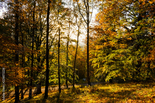 Papiers peints Forets Bright green forest natural walkway in sunny day light. Sunshine forest trees. Sun through vivid green forest.