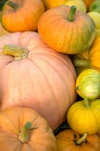 Photo From Top Of Harvest Of Orange Pumpkins